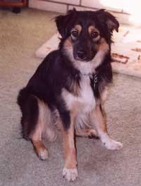Riley, the dog!